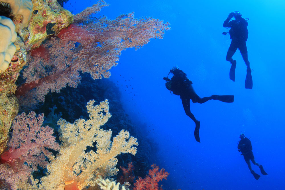 Scuba Diving Tour to the Philippines | DIVE LOFT KRK