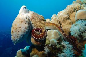 Faszin<br /> ierende Unterwasserwelt Loreley